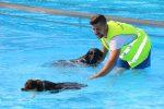 Wassergewöhnung und Schwimmstunde mit Ralf Somann