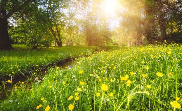 Frühlingserblühen am Gänsbach_Bastian Harttung