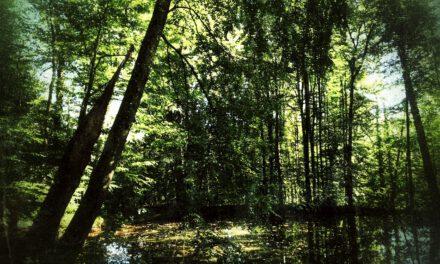 Die vielseitige Wirkung des Waldes auf Körper, Geist und Seele